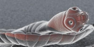 tapeworm-400x200