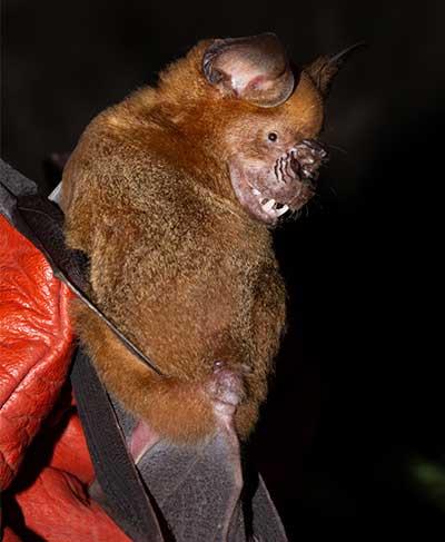 Sri Lankan Bats and Bat-Coronaviruses